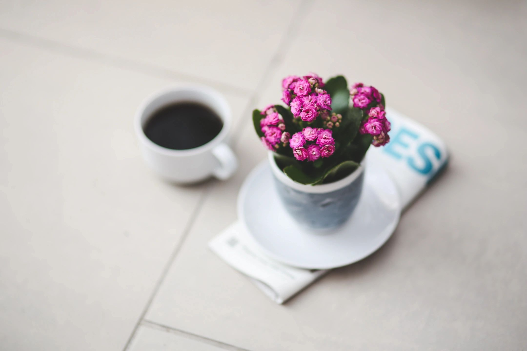 black coffee and pink flower pot